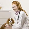 Vet Tech Schools Online- Online Vet Tech Schools- Online Animal Care Certificates